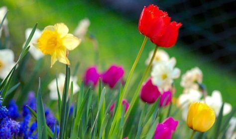Welcome Springtime