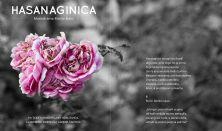 """Fest Mono- """"HASANAGINICA"""""""