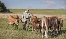 Bæredygtig økologisk kalveproduktion