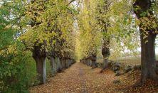 Mindfulness vandring – i naturen