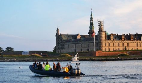 Marsvinesafari med Øresundsakvariet - Dagtur