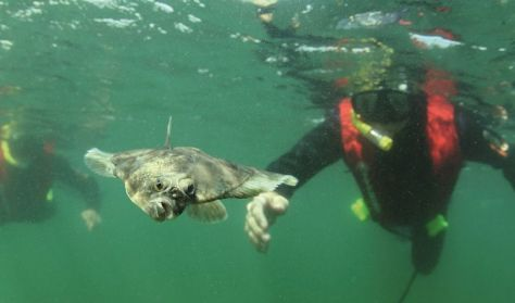 Snorkelture med Øresundsakvariet