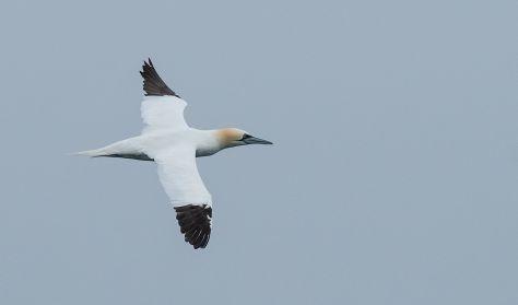 Vild havfuglesafari med Øresundsakvariet
