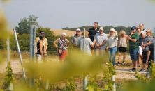 Besøg Danmarks største vingård på Røsnæs