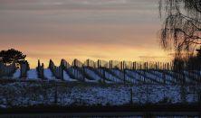 Visit Denmark's largest winery on Røsnæs
