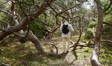 Naturen som vej til restitution og mindre stress