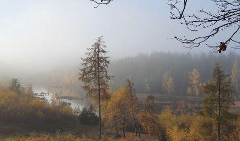 Stillevandring og skovbadning