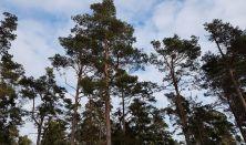 Mindful naturvandring - Asserbo Plantage