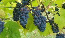 En eftermiddag med vinbonden