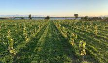 Sådan starter man en vingård