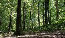 NaturGørGodt – Naturterapi og velvære